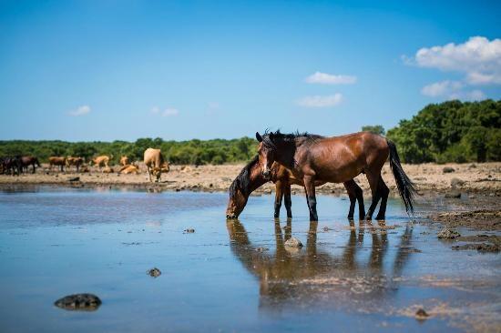 I Cavallini della Giara