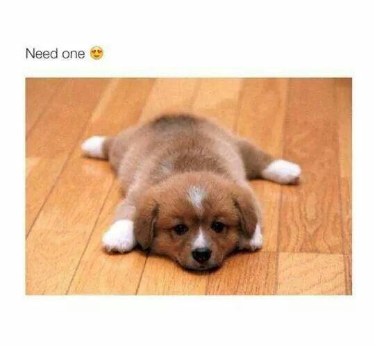 *dies of cuteness*