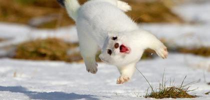25 animales sonrientes que te harán más feliz | eHow en Español