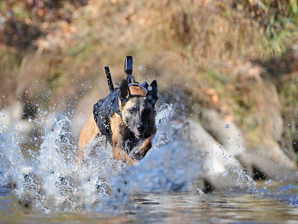 Canadian company K9 Storm Inc. received an $86,000 contract to create dogs vests used by the U.S. Naval Special Warfare Group