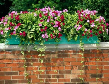 18 bright and beautiful window box planters - Flower box ideas for summer ...