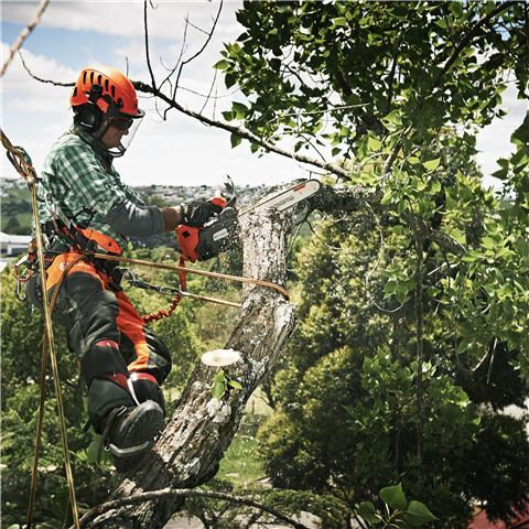 Whether you're a recreational chainsaw user who cuts firewood occasionally or a professional chainsaw operator, you can't go past this cash back deal. Purchase a selected Husqvarna chainsaw and claim up to $300 CASH BACK**Cash Back offer valid 01/04/2017 - 31/07/2017 strictly while stocks last, at participating Husqvarna Servicing Dealers only. Eligible Chainsaw models, 460, 556AT, 550XP, 536LiXp (must include Bli150 battery and QC300 charger), 570AT, 562XP, 576XP, 390XP, 395XP, 3120XP.