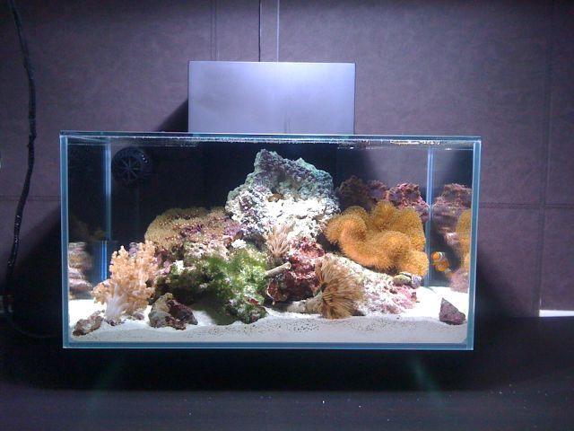 1000 images about aquarium on pinterest a turtle fish for Aquarium edge