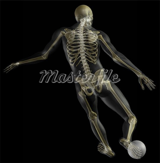 8 best skeleton in motion images on pinterest | skeleton, ballet, Skeleton