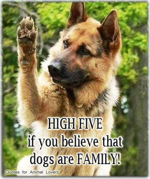 HIGH FIVE   If you believe that  Dogs are Family