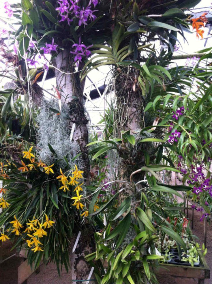 Orquídeas montada em uma árvore