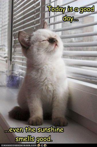 !: Cats, Kitty Cat, Sweet, Pet, Baby Kittens, Ragdoll Kittens, Baby Animal, Cute Kittens, Kittycat