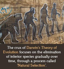 an introduction to the analysis of darwinism Strong evidence for evolution comes from the analysis of homologous structures: structures in different species that no longer perform the same task but which share a similar structure the tangled bank: an introduction to evolution.