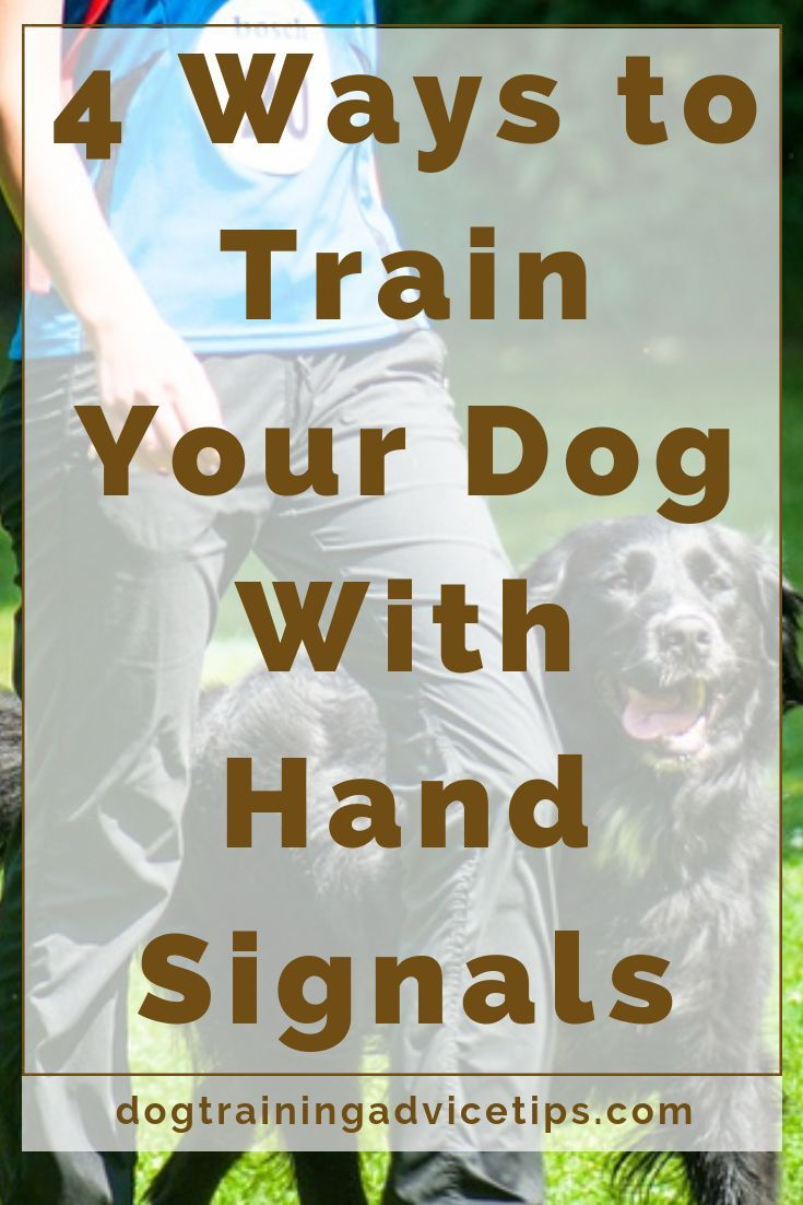 4 Ways To Train Your Dog With Hand Signals Training Your Dog