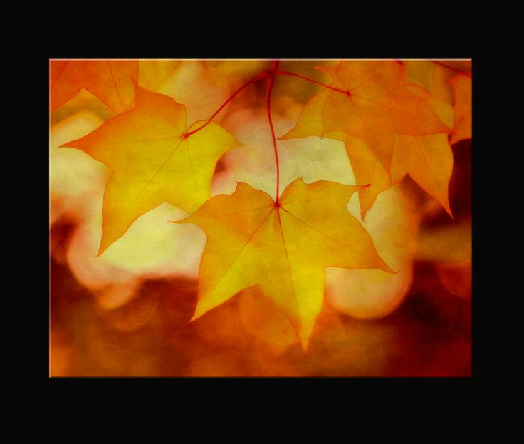 Photo Fall by clint hudson on 500px