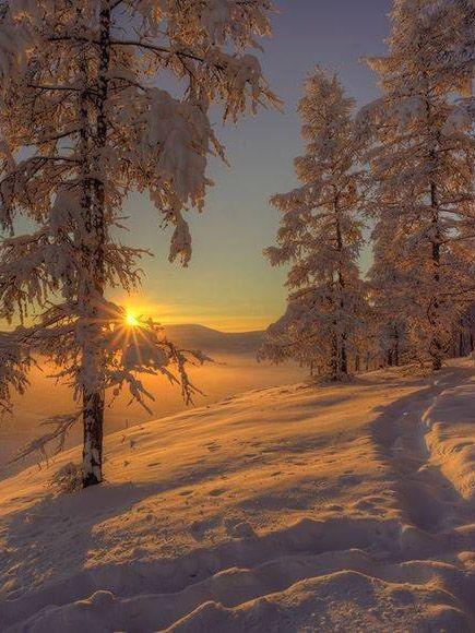 ,  #Winterbildertiere #winterlandscape ,  #Winterbildertiere