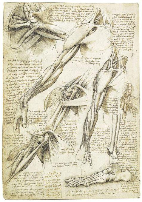 Os desenhos anatômicos de Leonardo da Vinci