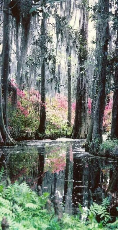 Cypress Gardens Monks Corner North Charleston, South Carolina
