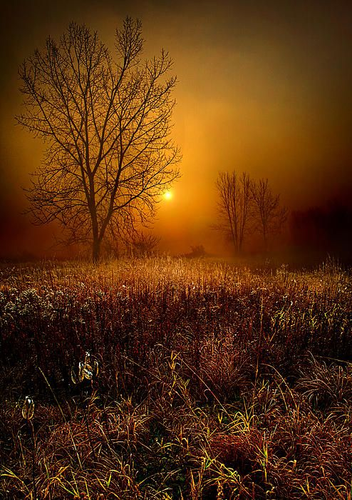 """""""The Fog"""" ... From the Horizon series by Phil Koch, turning natural landscapes into portraits of nature.  I created the series of Horizons in 2010 as photographic journey through the landscapes of Wisconsin. I rarely shoot in the same location as the sun rises and find the meadows that most just drive by without a second thought as the best place to wait and watch."""