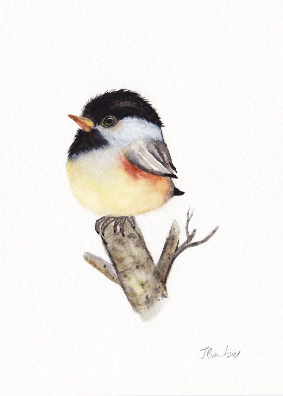Baby Chickadee Print of Original watercolor painting, 5x7 inches, Chickadee  art