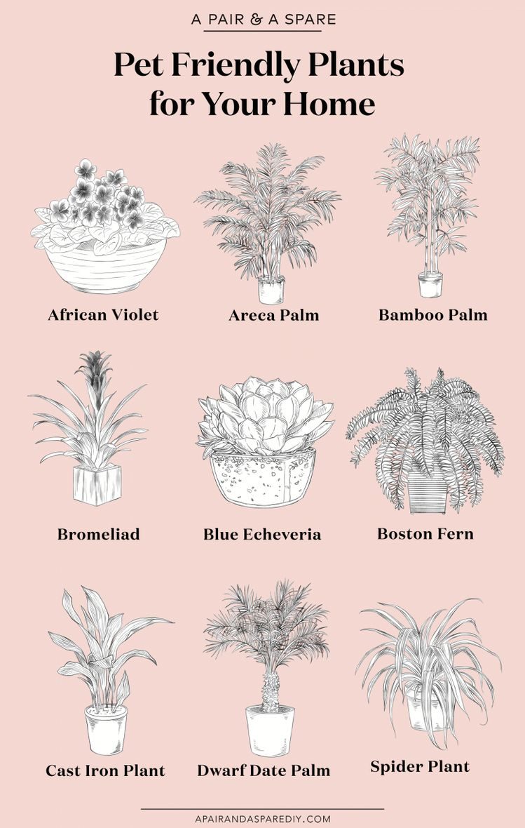 The Best Pet Friendly Plants for Your Home | A Pair & A Spare
