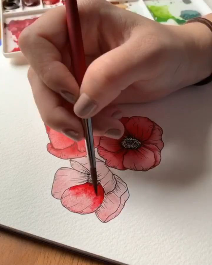 Watercolor line drawn poppies
