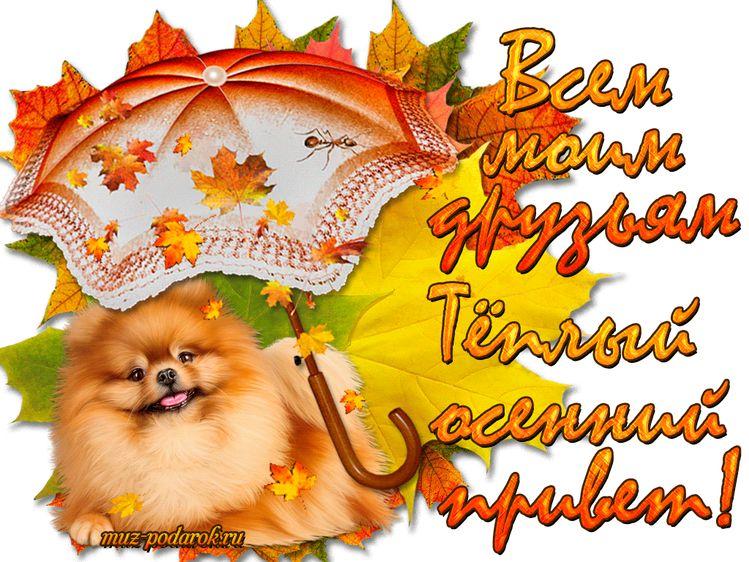 Осенний приветик картинки с надписями гифки, девочке днем рождения