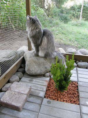 Best Cat Enclosure Inspiration 60