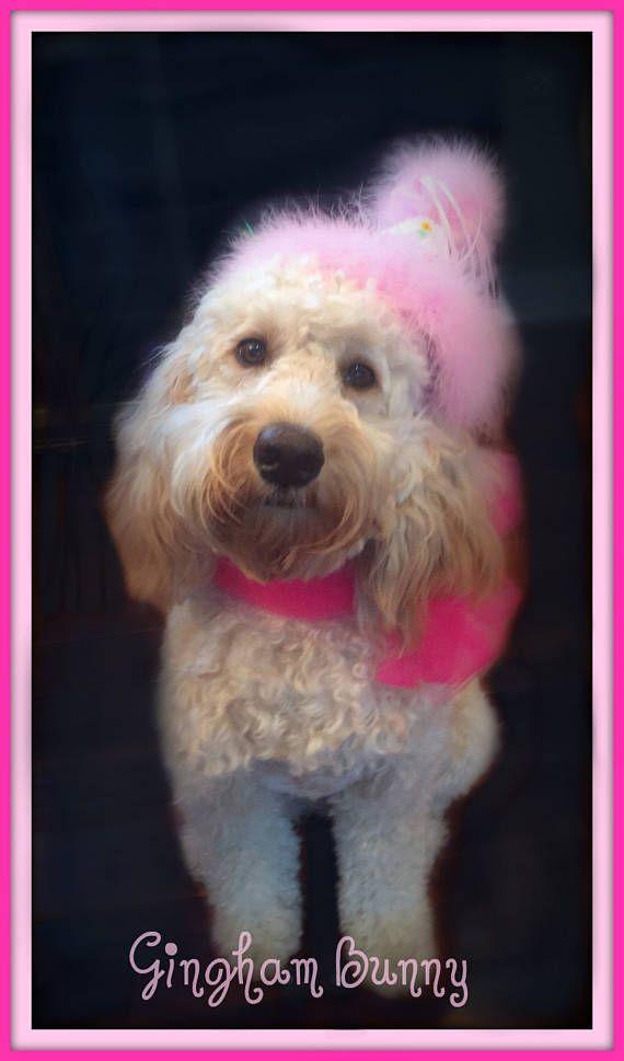 Dog Birthday Hat Puppy Doggie