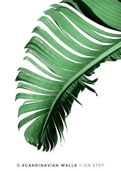 #banana #leaf #poster # print #palm #leaves #botanical #tropical #bananaleaf #palmleaf #wallart #art