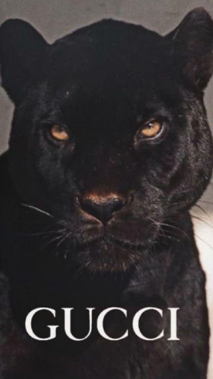 Gucci black panther wallpaper