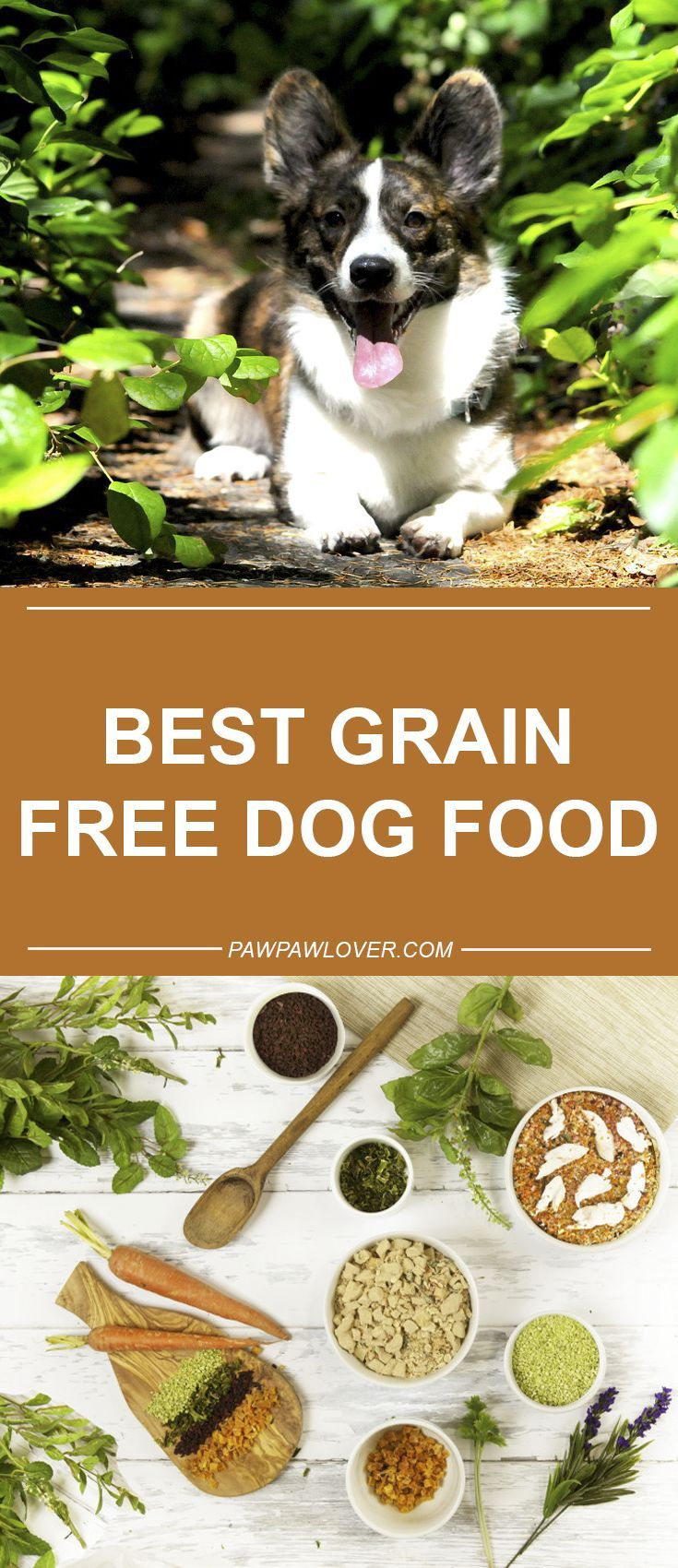 Best Grain Free Dog Food For Skin Allergies 2018 Dry