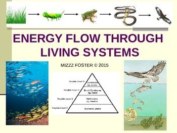 Ecology Energy Flow Trophic Levels Food Chains Food We
