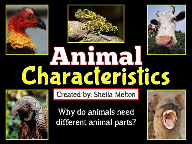 animal characteristics powerpoint