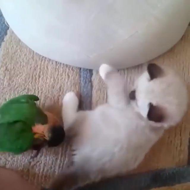 Animals & Birds Play........