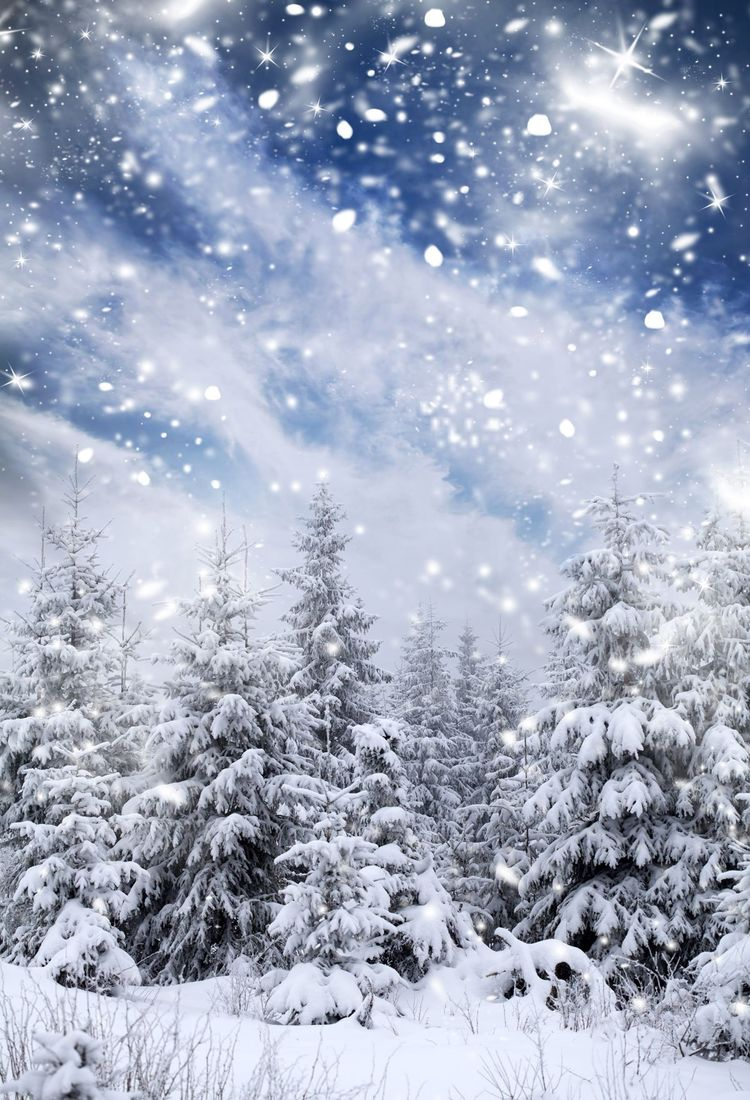 Kate Winter Forest With Snowflakes for Photography