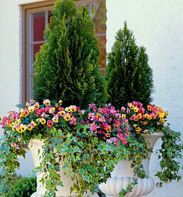 ideas about Arborvitae Landscaping on Pinterest