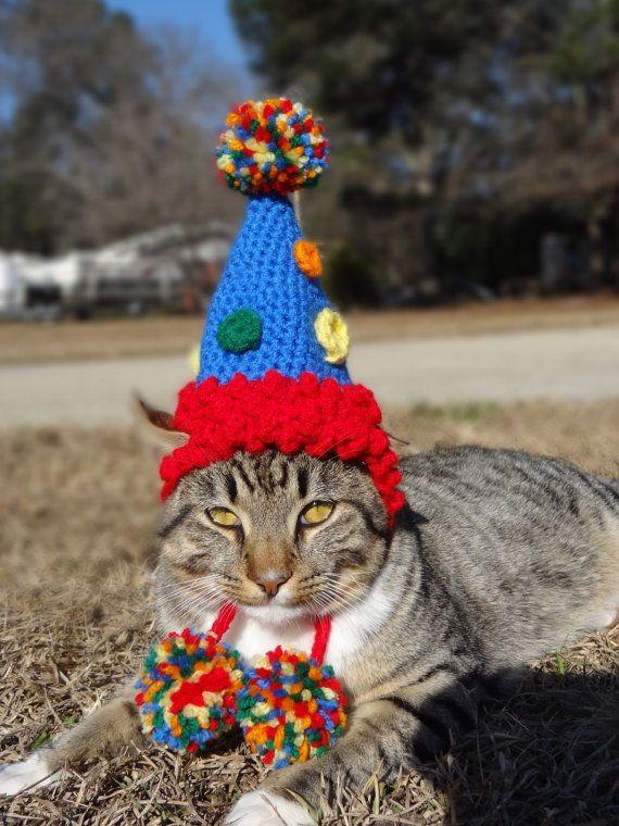 Birthday Party Dog Hat Costume Cats And Small By Iheartneedlework