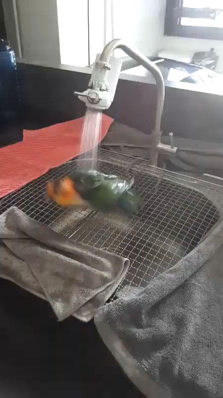 Just a perfect bird bath