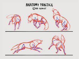 Anatomy practice 3 by Kuuranhukka