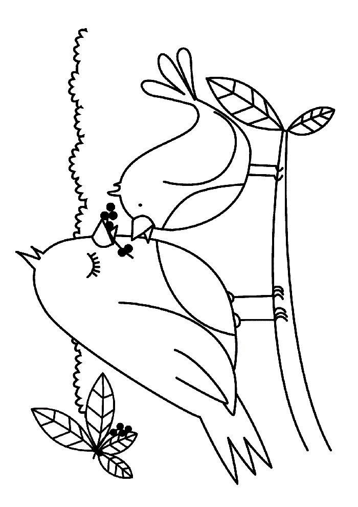 Kuş Boyama Sayfası