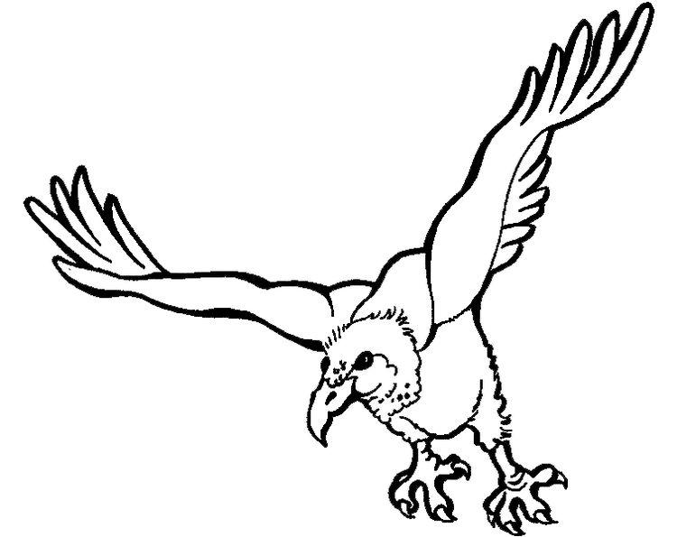 Akbaba Boyama Sayfası