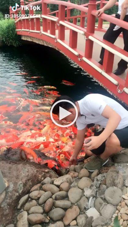 Os turistas podem pescar com uma mão no rio - ENGRAÇADO 9GAG LOL LMAO