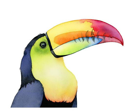Toucan watercolor. Prints available in the Etsy store.