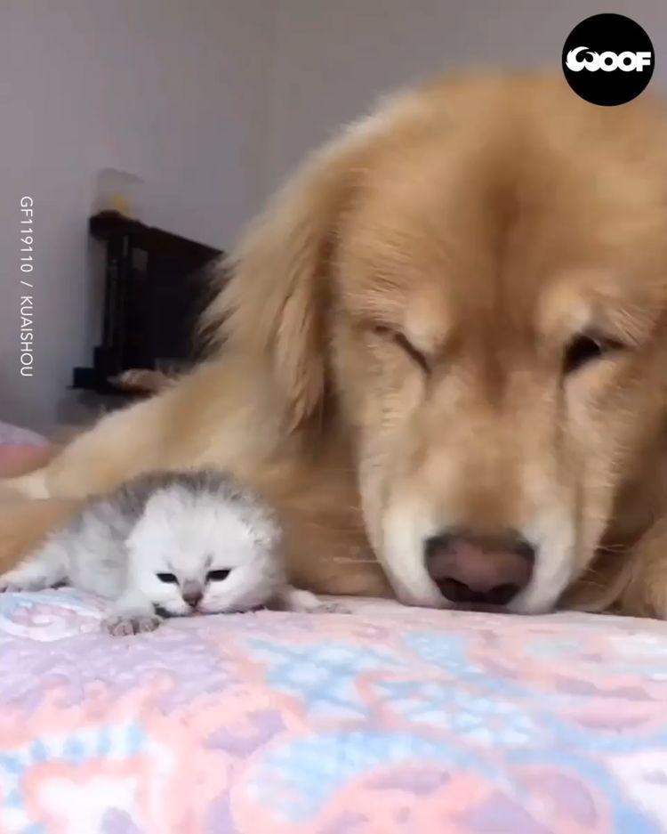 Small kitty.