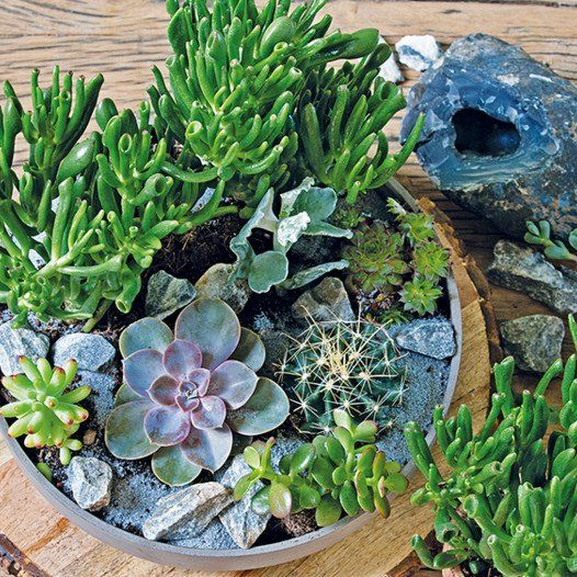 kamerplant binnenplant planten voor woonkamer slaapkamer