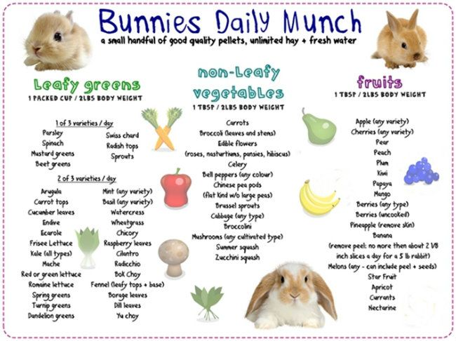 Bunnies daily munch ♥ Loved and pinned by Noah's Ark Mobile