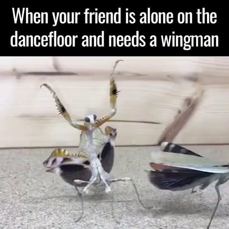 Id prolly be his wingman