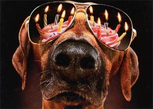 Dog Birthday Candles Sunglasses Funny Birthday Card Gree