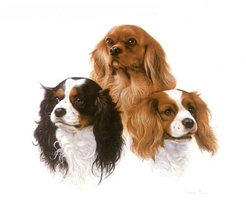 CAVALIER KING CHARLES SPANIELS DOG tri blenheim SPOILT DOG PLAQUE TILE
