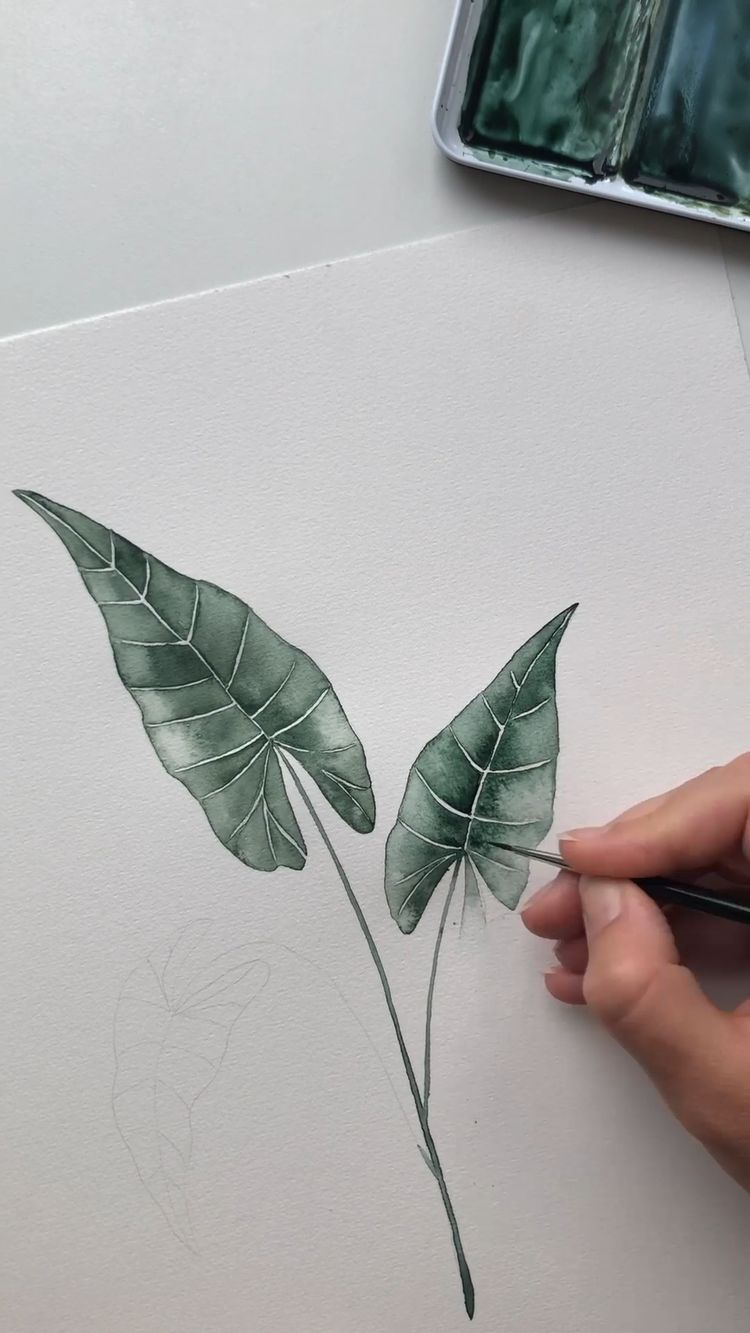 Alocasia watercolor painting by Skyla Design#alocasia #design #painting #skyla #watercolor