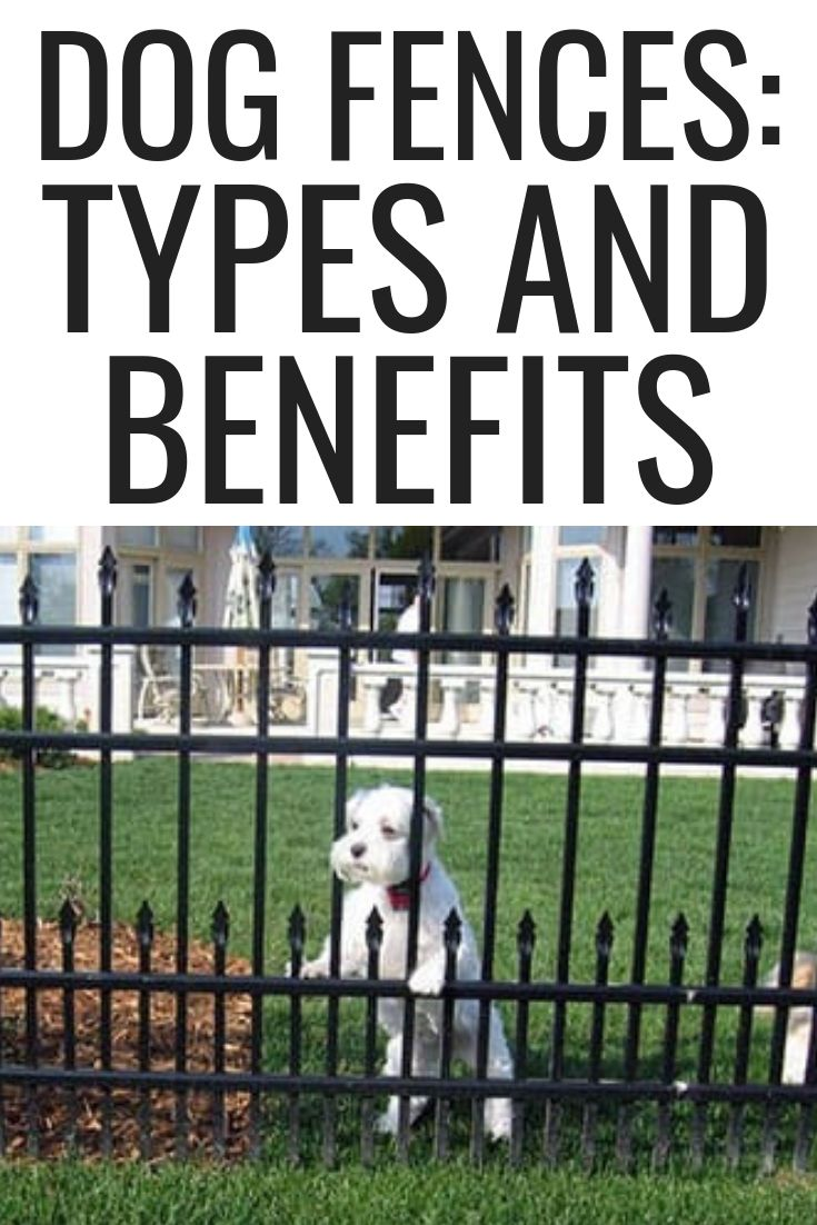 dog fences: types and benefits