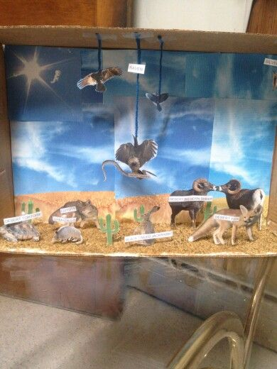 Desert ecosystem diorama  4th grade project  Sand made from