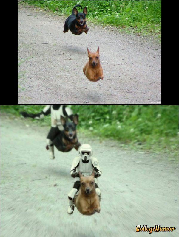If they couldn't beat little furry Ewoks the least they could do is ride little furry dogs.