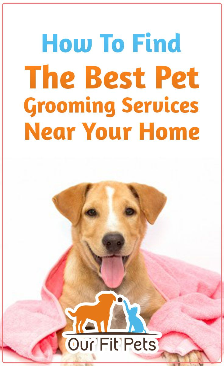 Finding The Best Pet Dog Grooming Services Near Your Home